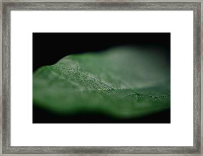 Green Leaf Framed Print by Jeffrey Platt