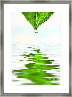 Green Leaf Over Water Reflection Framed Print by Sandra Cunningham