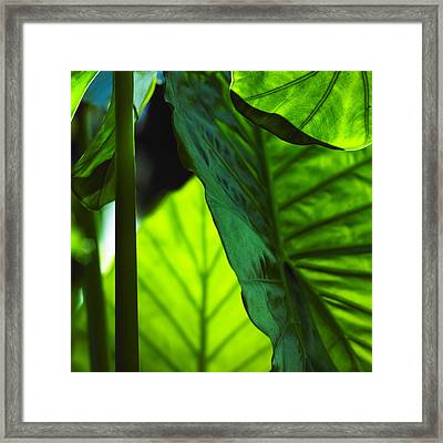 Green Leaf Trilogy I Framed Print by Silke Brubaker