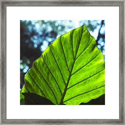 Green Leaf Trilogy II Framed Print