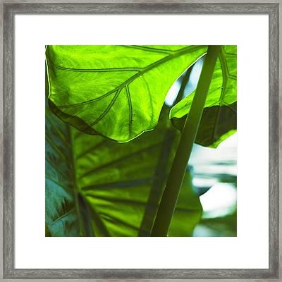 Green Leaf Trilogy IIi Framed Print