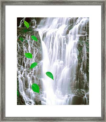 Green Leaves Cascading In Front Framed Print by Panoramic Images