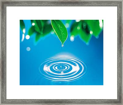 Green Leaves Dripping Water Framed Print