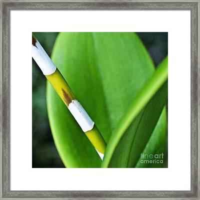 Green Leaves Framed Print by Heiko Koehrer-Wagner
