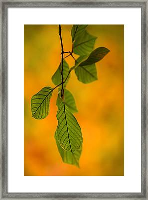 Green Leaves In Autumn Framed Print