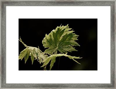 Green Leaves Framed Print by Jeff Swan