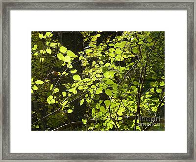 Green Leaves Framed Print