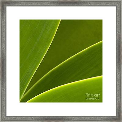 Green Leaves Series  2 Framed Print