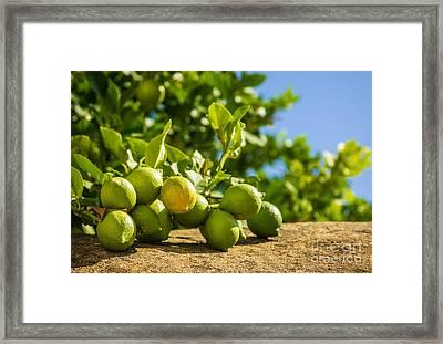 Green Lemons Framed Print