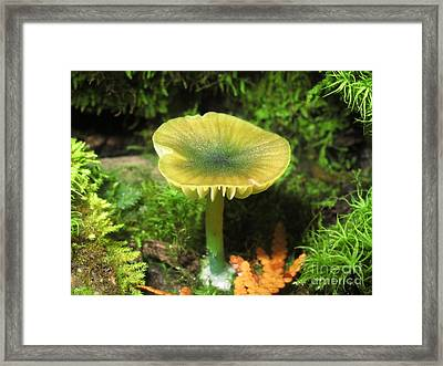 Green Leptonia Framed Print