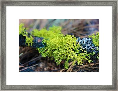 Green Lichen Framed Print