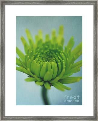 Green Light Framed Print by Irina Wardas