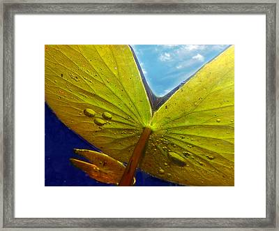 Green Lilly Pad Framed Print