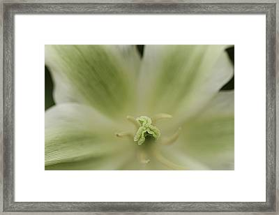 Green Lily Framed Print by Lesley Rigg