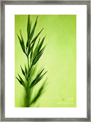 Green Framed Print by Lois Bryan