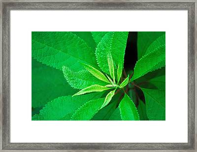 Green Framed Print by Ludwig Keck