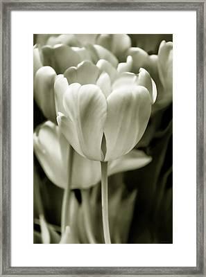 Olive Green Luminous Tulip Flowers Framed Print