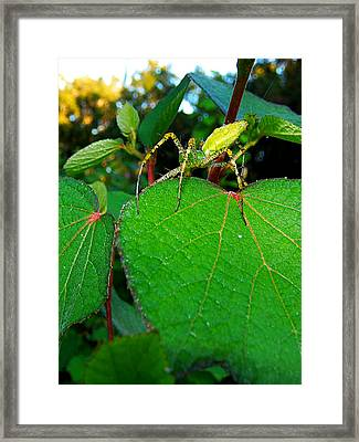 Framed Print featuring the photograph Green Lynx Spider 002 by Chris Mercer