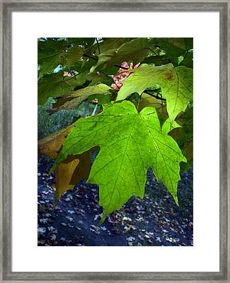 Green Maple Leaves Framed Print by Michel Mata