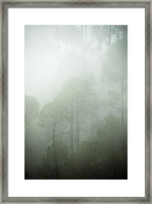 Green Mist Framed Print by Rajiv Chopra