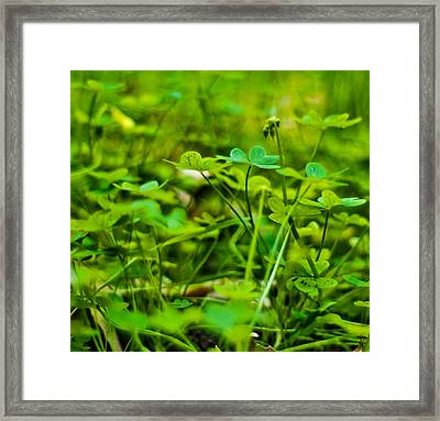 Green Morning  Framed Print by Andrew Raby