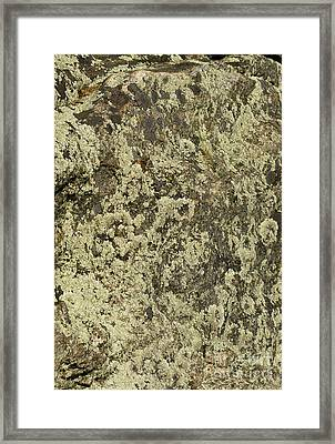 Framed Print featuring the photograph Green Moss by Les Palenik