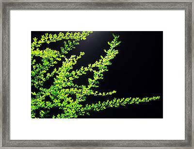 Green No. 10 - Street Lamp Framed Print by Phoresto Kim