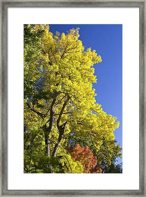 Green Orange Yellow And Blue Framed Print by James BO  Insogna