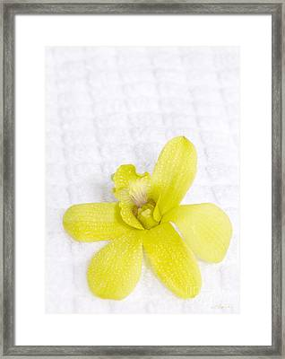 Green Orchid On Spa Towel Framed Print by Iris Richardson