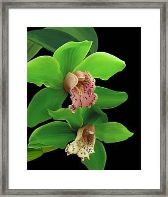 Green Orchids Framed Print