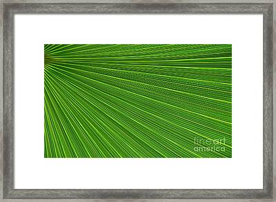 Green Palm Abstract Framed Print by Kathleen Struckle