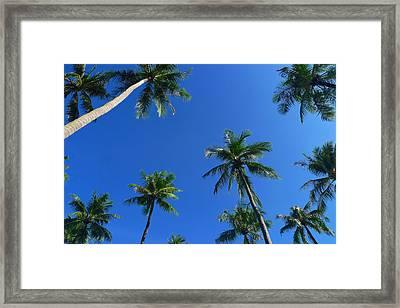 Green Palms Blue Sky Framed Print