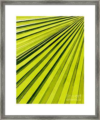 Green Palm Frond Framed Print