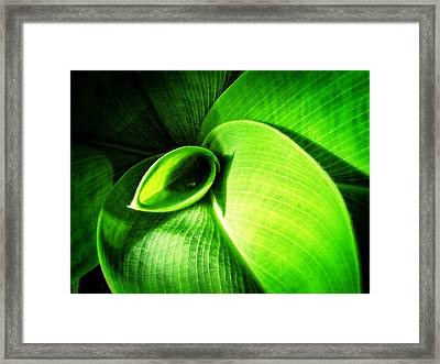 Green Paradise - Leaves By Sharon Cummings Framed Print