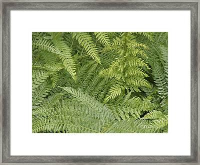 Green Peace 2 Framed Print by Sandy Molinaro