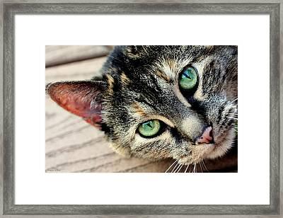 Green Pepper Framed Print