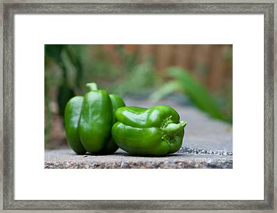 Green Peppers Framed Print by Kay Pickens