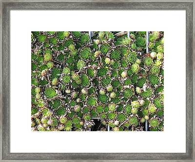 Green Petals Framed Print