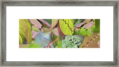 Green Pink Collage I Framed Print by Cora Niele