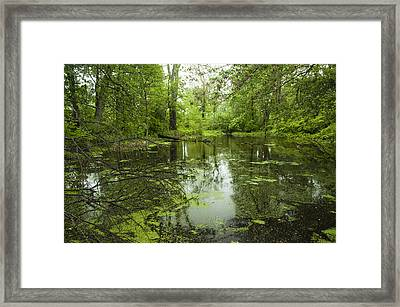Green Blossoms On Pond Framed Print