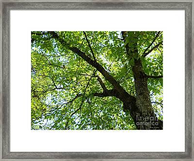 Green Framed Print by Ramona Matei