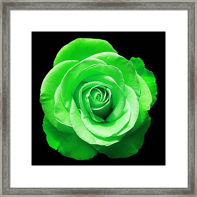 Green Rose Framed Print by Aimee L Maher Photography and Art Visit ALMGallerydotcom