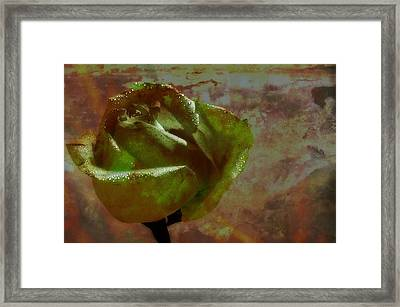 Green Rose Framed Print