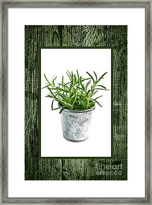 Green Rosemary Herb In Small Pot Framed Print by Elena Elisseeva
