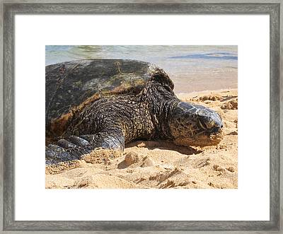 Green Sea Turtle 2 - Kauai Framed Print