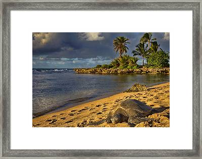 Green Sea Turtle At Sunset Framed Print