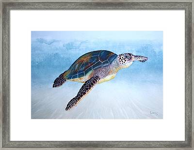 Green Sea Turtle II Framed Print by Jeff Lucas
