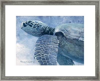 Green Sea Turtle Framed Print by Randall Scott