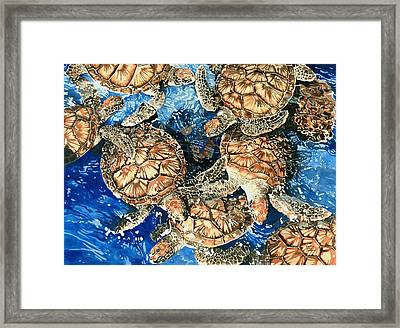Green Sea Turtles Framed Print