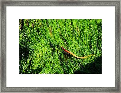 Green - Seaside Abstract Framed Print by Aidan Moran